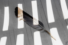 A feather fell to the chair (Bela Bodo) Tags: feather chair abstract shadow dream spectacular backrest mystic