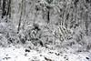 Brindabella Snow 0001 (BrianRope) Tags: brindabellas brindabellaroad cotterriver namadginationalpark snow brindabella nsw australia