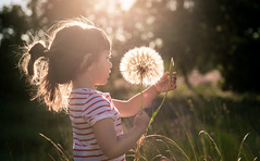 Dream big, my sweet little girl (Bai R.) Tags: dandelion sunset dream wish big spring summer child childhood children joy happy happiness outdoors woods forest