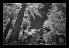 La Palma, Sony A7 IR, Nikkor 18mm/3.5 (Bartonio) Tags: 720nm bw blanconegro canaryislands clouds infrared ir islascanarias lapalma losllanosdearidane modified monochrome nikkor18mm35 park parque sonya7ir tree