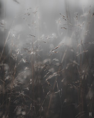 Fragile - Series 2 /03 (KromOner) Tags: kromoner art design minimal dark nature silent solitude silence mood atmosphere quiet sunset canon austria ldr calm grass gras gräser depthoffield