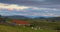 Late Light On Dava Moor (Geoff France) Tags: moor dava landscape scottishlandscape sky sheep eveninglight cairngorms cairngormsnationalpark grantownonspey moorland