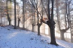 Winter Dream (Hector Prada) Tags: bosque forest bruma mist sol sun beams mágico magic tree árbol invierno winter nieve snow dreamy luz light paísvasco basquecountry