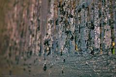 Hidden treasures (Daria Kucharczyk Photography) Tags: texture macro painting art closeup colors