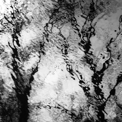 Trees In Water 136 (noahbw) Tags: captaindanielwrightwoods d5000 desplainesriver dof nikon abstract blackwhite blackandwhite blur branches bw depthoffield distortion forest monochrome natural noahbw reflection ripples river silhouette spring square trees water woods