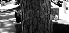 ....Snooze (Antonio Piccialli) Tags: 2018 luglio campania canon cilento castellabate canonixus155 santamariadicastellabate streetphoto bn blackwhite bwartaward bianconero blackandwhite bw explore explored flickr flickrclickx fluidrexplored fluidr sottoilpino