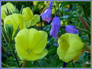Wildwuchs in unserem Garten / Uncontrolled growth in our garden