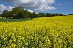 C'était en Avril (Excalibur67) Tags: nikon d750 sigma globalvision 24105f4dgoshsma paysage landscape ciel cloud sky nature nuages arbres trees colza jaune yellow campagne champs