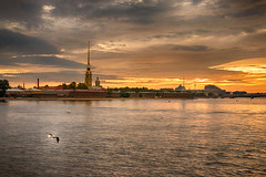 Seagull flying on the wings of morning - Чайка, летящая на крыльях утра (Valery Parshin) Tags: russia stpetersburg saintpetersburg neva bird sunrise sky valeryparshin earlymorning morning river water canoneos70d sigma1750mmf28exdcoshsm ngc