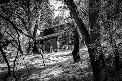 Tuttletown, California (paccode) Tags: solemn d850 landscape bushes brush serious hills california abandoned barn monochrome shack forest scary tree forgotten creepy farm blackwhite quiet mountain sonora unitedstates us