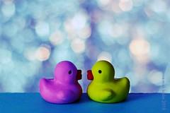ROZE & GEEL    PINK & YELLOW (Anne-Miek Bibbe) Tags: mm macromonday macromondays erasers gummetjes stufjes vlakgum eendjes rubberducks badeendjes minibadeendjes minirubberducks happymacromonday macro canoneos700d canoneosrebelt5idslr annemiekbibbe bibbe nederland 2018
