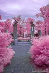 6-watermark-R (Brian M Hale) Tags: ir infrared infra red 590 590nm outside outdoors newengland new england usa cottoncandy cotton candy brian hale brianhalephoto architecture ruins castle hill ipswich ma mass massachusetts statues monuments pink blue teal trees bushes