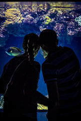 An Aquatic Couple (andreadressig) Tags: aquarium couple love fish