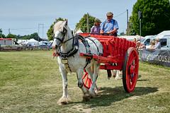 Bluebell (nigelboulton72) Tags: shirehorse shropshire horse carriage cart farm rural countryside england english