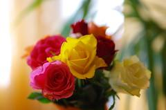 Roses for my darling (Baubec Izzet) Tags: baubecizzet pentax flower roses bouquet nature