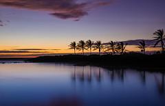 IMG_4947-Edit (Greg Meyer MD(H)) Tags: hawaii island reflection sunset palmtree