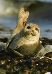 DE-1475550 ЛС (Sofia_Kam) Tags: germany seal animals