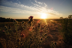 hazy day sunset (Paul Wrights Reserved) Tags: landscape landscapes sky skyscape sunset sunsets sunburst sun flower flowers wildflowers beautiful beauty