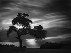 Tree in Sunset (Thunderbird61) Tags: tree solitaire solitär sunset landscape iserlohn nrw germany clouds le mono monochrome monochrom monochromatic mediumformat pentaxart pentax pentax645z bw sw zw nb schwarzweis blackwhite zwartwit noirblanc neroblanco paysage