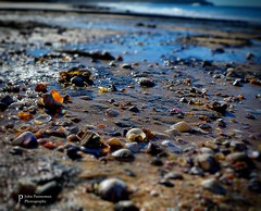 Seaside (John Panneman Photography) Tags: sea seaside rocks shells beach water shoalhaven nsw australia nikon d610 panneman