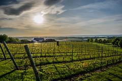 2018 - photo 167 of 365 - sunset at Luckett's Vineyard (old_hippy1948) Tags: sunset wine vineyard vines