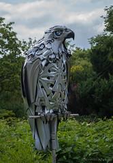 bird of prey (sure2talk) Tags: birdofprey artinthegarden hilliergardens nikond60 nikkor1855mmf3556afs sculpture