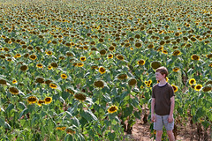 sunflwerdownz (FAIRFIELDFAMILY) Tags: jason taylor winnsboro sc south carolina fairfield county historic granite house home church baptist arts crafts craftsman design style railroad tracks track rail train ringling brothers circus greatest show earth grant hospital surgery explore wall outside sunflower field sunflowers flower greenbrier cut pulpit preaching stained glass window old young pretty architecture town