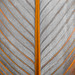 Line Symmetry - Macro Mondays