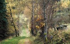 Autumn Hike (Netsrak) Tags: baum bergheidenweg bäume eifel europa europe heide landschaft natur wald landscape nature woods