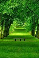 Forêt nature2 (CISSÉO) Tags: forêts arbres bois nature vert