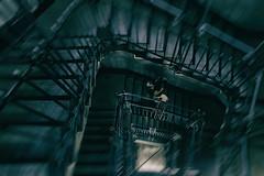 She`s gone... (michael_hamburg69) Tags: schanzenstrasse volkshochschule vhs eingangschanzenstrasse75 treppenhaus gitter vergittert schmiedekunst thecraftofsmithing art metalwork hamburg germany deutschland stair stairs stairway staircase treppe stiegenhaus step steps handrail rail geländer glanda woman shesgone