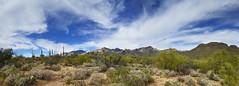 Sonoran Desert Landscape (BongoInc) Tags: sonorandesert arizona sabinocanyon desertsouthwest desertlandscape tucson