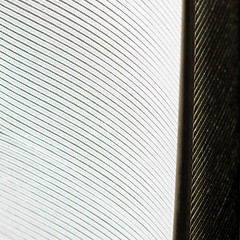 Feather ... (sosivov) Tags: macromondays linesymmetry white black feather square squareformat macro abstract