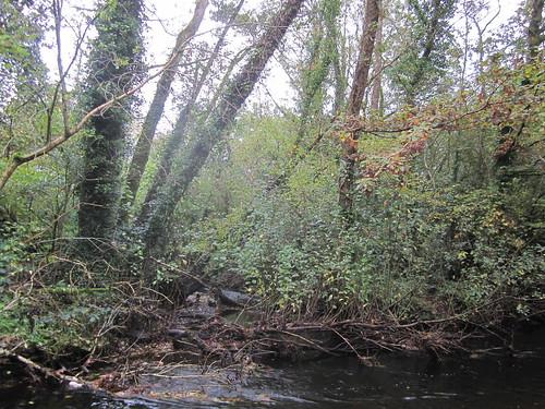 wet woodland The Gearagh