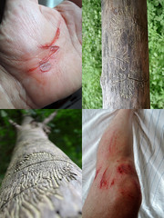 WOUND POEM POLYPTYCH (LitterART) Tags: wunde wound scare wounds scares woodworm branch mtb bike bicycle verlletzung verletzung sturz rad scary