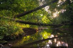 Dřevnice (jirka.zapalka) Tags: czechrepublic landscape forest trees sunset sun summer green evening drevnice river