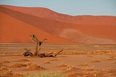IMG_8355 (Tatjana_Schmid) Tags: namibia sossusvlei deadvlei wüste desert sand sanddunes dünen africa afrika landschaft landscape reise holiday urlaub travel