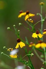 (jimbop22001) Tags: plants
