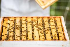 Idaho Bees (Thomas Hawk) Tags: america idaho ketchum sunvalley techondeck techondeck2015 usa unitedstates unitedstatesofamerica bee beekeeping bees honey honeybee honeybees insect insects fav10