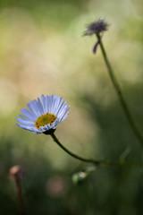 Final Fantasy (Mauro Pastore) Tags: campingcypsela elmasosdepals canoneos50d mauropastore ireland dublin tamronspaf90mmf28macro garden botanical flora flower floral closeup macro