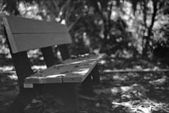 Two Can Sit Here (PositiveAboutNegatives) Tags: leica rangefinder m3 vintage leicam3 bench park bokeh carlzeiss50mmsonnarpostwaramedeo adapterzeiss 50mm sonnar f15filmanalogfomafomapanfomapan 100foma 100coolscannikon 9000 scanner kodak hc110