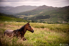 19th June 2018 (Rob Sutherland) Tags: horse equine meadow field lying rest resting lakes lakeland lakedistrict duddon valley cumbria cumbrian hill farm farming agriculture view nationalpark ldnp dunnerdale