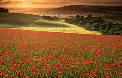 Suns Up (Eddie Hyde ARPS) Tags: poppies sunrise dawn sussex landscape