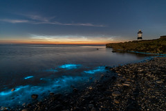 'Night-Shining' - Anglesey (Kristofer Williams) Tags: bioluminescence noctilucence nlc noctilucent cloud water sea coast beach lighthouse night sky stars summer anglesey wales penmonpoint landscape seascape nightscape