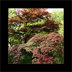 Tree (Jean-Louis DUMAS) Tags: arbre tree nature landscapesdreams landscape paysage vert green parc
