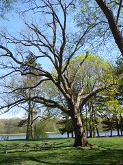 Winfield, IL, Herrick Lake Forest Preserve, Picnic Area (Mary Warren 10.9+ Million Views) Tags: winfieldil herricklakeforestpreserve spring nature flora green leaves foliage lake water trees bicycle picnictables