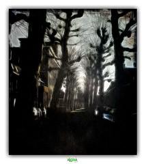 DON'T LET ME BE AFRAID (régisa) Tags: bruges brugge street rue westvlaanderen belgique belgië arbre baum boom tree andalsothetrees