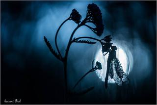 Bleu nuit (2)