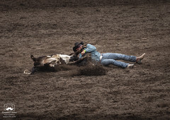Steer Wrestling, Part 4 of 4 (allentimothy1947) Tags: 2018 california duncansmills sonomacounty boots competition cowboy horns jeans rodeo russianriverrodeo shirt steer steerwrestling takedown dirt danger arena buckle dangerous