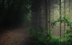Dance of Light (Netsrak) Tags: baum eu europa europe landschaft natur nebel wald fog landscape mist nature tree trees woods bäume eifel